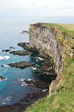 Puffin cliffs Stock Photography