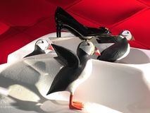 Puffin Sales Display Stock Photography