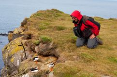 Puffin and tourist stock photography
