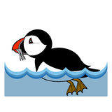 Puffin vector illustration on white background Royalty Free Stock Photos