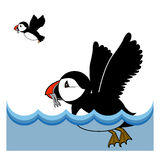 Puffin vector illustration on white background Stock Image