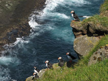 Puffins. Some puffins in the island of Mykines, Faroe Islands Royalty Free Stock Photos