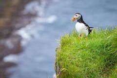 Puffins on Mykines cliffs and atlantic ocean. Mykines island, Faroe Islands, Europe