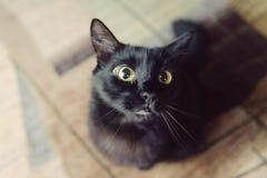 Puffy Cat Stock Photo