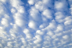 Puffy Cloud Background. Sky just full of puffy white clouds Royalty Free Stock Images