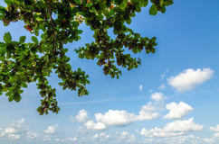 Puffy clouds and blue sky. In sunny day Stock Photo