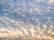 Puffy cloud evening. Puffy clouds, evening blue sky Stock Image
