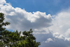 Puffy clouds on a sunny day. Puffy clouds on a wonderful sunny day above trees in the foreground Royalty Free Stock Photography
