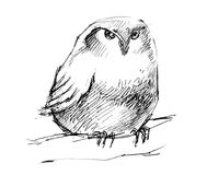Puffy owl pencil drawing. Cute illustration hand drawn Royalty Free Stock Photos