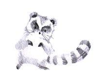 Puffy cute raccoon pencil drawing. Cute black and white puffy raccoon pencil drawing Royalty Free Stock Photo