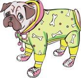 pug одетьнный собакой Стоковое Фото