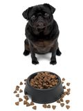 Pug Stock Photography