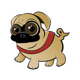 Pug Royalty Free Stock Photo