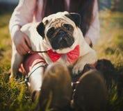 Pug Lizenzfreie Stockfotografie