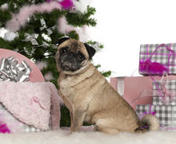 Pug, 4 years old, with Christmas tree and gifts Royalty Free Stock Photos