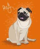Pug Fotografie Stock