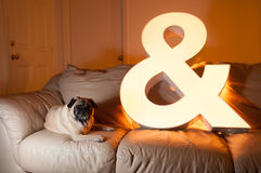 Pug and Ampersand Royalty Free Stock Image