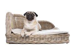 Pug auf einem Luxuxbett Lizenzfreie Stockfotos
