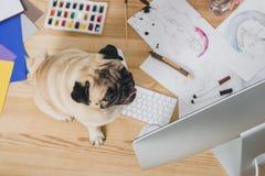 Pug bonito na tabela de funcionamento com ilustrações da forma fotografia de stock