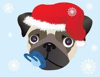 Pug in Christmas hat. Vector Image Royalty Free Stock Image