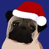 Pug close up in Santa cap Royalty Free Stock Photos