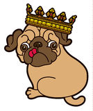 Pug cute puppy in the crown Stock Images
