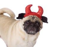Pug devil dog. Funny looking pug dog wearing red devil horns Stock Photos