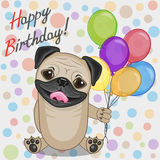 Pug Dog with balloons Royalty Free Stock Image