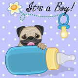 Pug Dog boy Royalty Free Stock Images