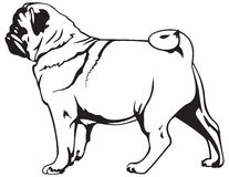 Pug dog breed Stock Photos