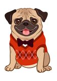 Pug dog cartoon illustration. Cute friendly fat chubby fawn sitting pug puppy, smiling with tongue out, wearing argyle vest and b. Ow tie. Pets, dog lovers vector illustration