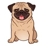 Pug dog cartoon illustration. Cute friendly fat chubby fawn sitting pug puppy, smiling with tongue out. Pets, dog lovers, animal. Themed design element isolated vector illustration
