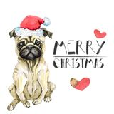 Pug dog celebrates new year in santa claus hat. Christmas puppy. Isolated on white background. watercolor greeting card. Pug dog celebrates new year in santa vector illustration