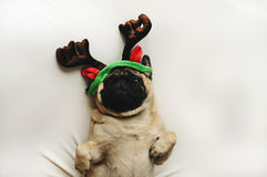 Pug dog in Christmas costume Royalty Free Stock Photo