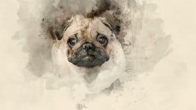 Pug-dog close up Royalty Free Stock Image