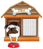 Pug dog in dog house Royalty Free Stock Images