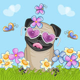 Pug Dog with flowers Stock Images