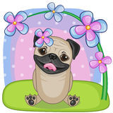 Pug Dog with flowers Stock Image