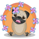 Pug Dog with flowers Stock Photo