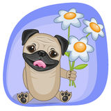 Pug Dog with flowers Royalty Free Stock Image