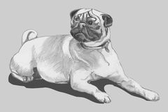 Pug dog (freehand drawing, kids) Royalty Free Stock Photography