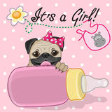 Pug Dog girl Royalty Free Stock Images