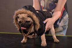 Pug dog and girl stock photo