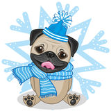 Pug Dog in a hat Royalty Free Stock Images
