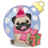 Pug Dog in a hat Stock Photos