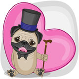 Pug Dog in hat Stock Photography