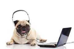 Pug dog with headphone isolated on white background callcenter computer Stock Photo
