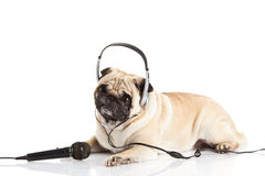 Pug dog with headphone isolated on white background callcenter concept Royalty Free Stock Photo