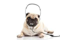 Pug dog with headphone isolated on white background callcenter. High technology music dance concept for design royalty free stock photos