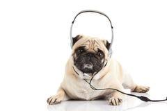 Pug dog with headphone isolated on white background callcenter Royalty Free Stock Photos